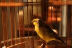 caged-bird-2.jpg